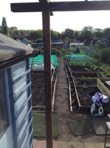 The view down the allotment with the new structure.